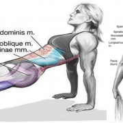 Reverse Planks That Help Strengthen The Core And Lower Body